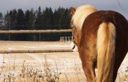 Ravinaiset hevonen hero